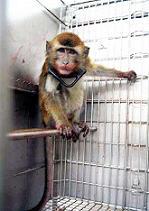 Un crimen que no cesa: La experimentación con animales