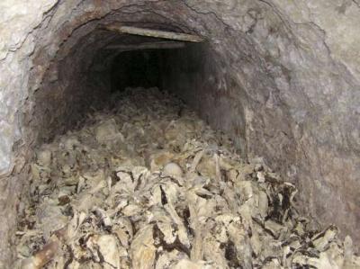 Descubren en Eslovenia fosa común con cientos de cadáveres