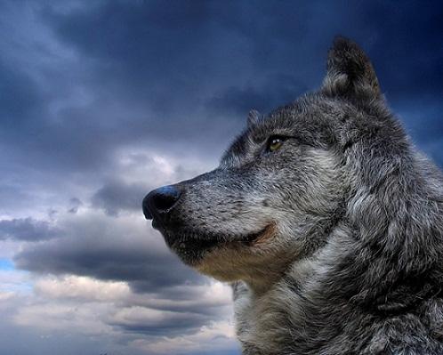 Juan Pablo Vitali: El último lobo de Europa
